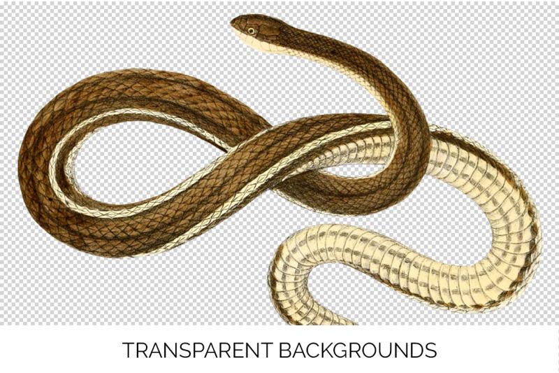 snake-clipart-bundle