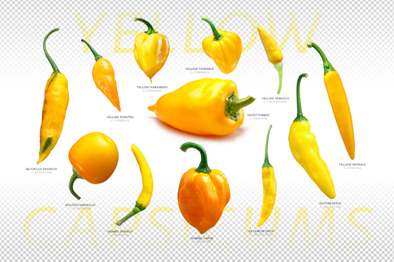 yellow-capsicums