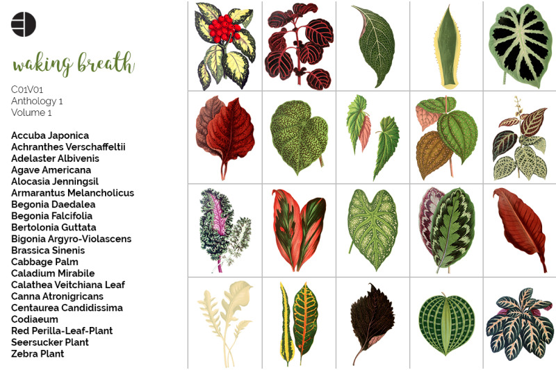 leaves-clipart-bundle