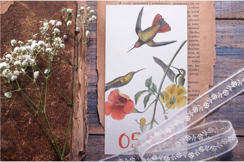 hummingbird-clipart-bundle