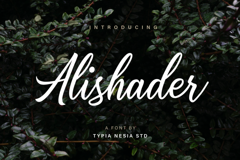 alishader