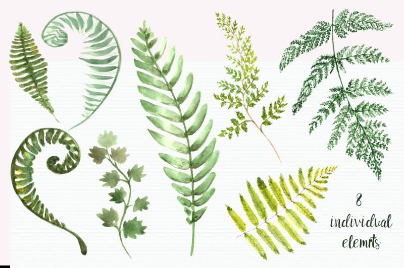 watercolor-fern-clip-art-set