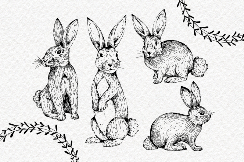 rabbits-clipart-collection-hand-drawn-pngs