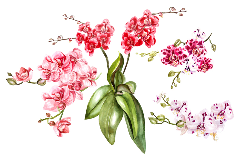 hand-drawn-watercolor-orchids-2