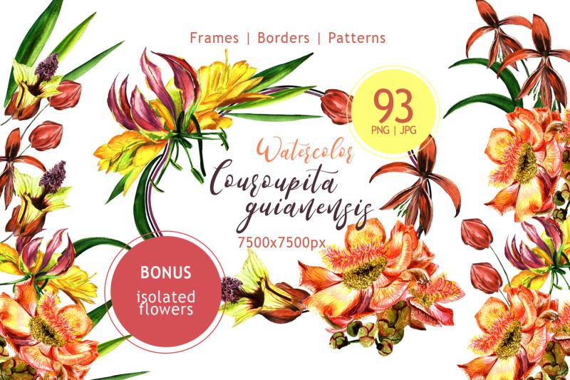 couroupita-guianensis-png-watercolor-set