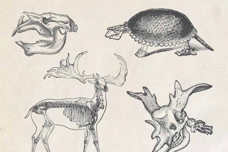 prehistoria-vintage-prehistoric-vectors-pngs