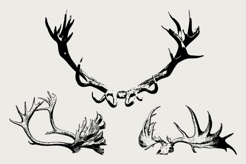 vector-horns-bulls-deers-moose