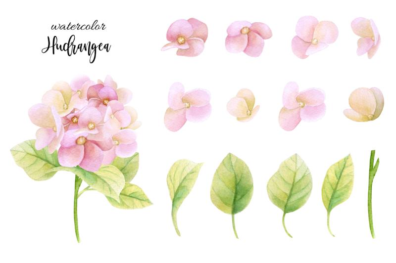 watercolor-hydrangea