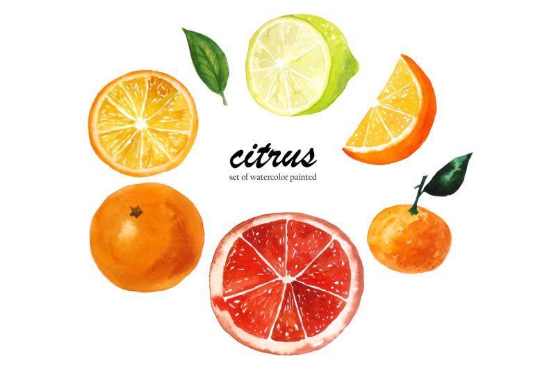 set-of-watercolor-citrus-fruits