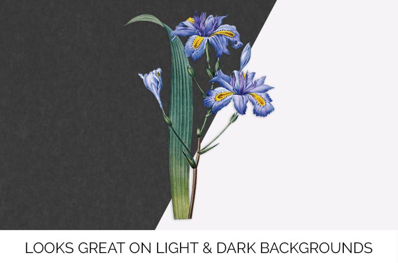 iris-clipart-flower