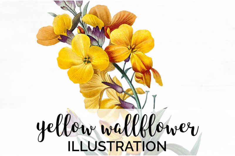 yellow-flower-clipart