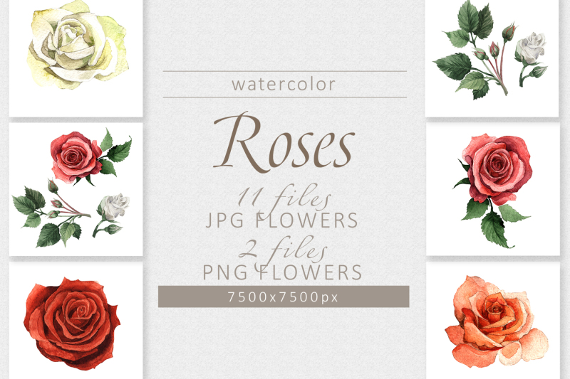 colorful-roses-png-watercolor-set