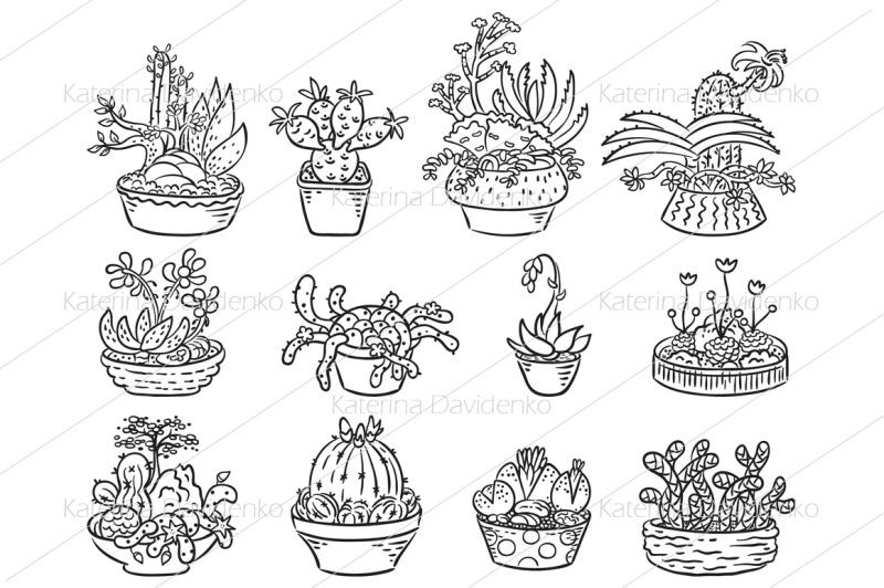 set-of-succulent-compositions-in-containers
