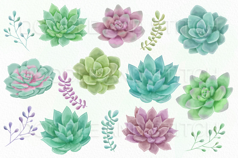 watercolor-succulent-clipart-illustrations