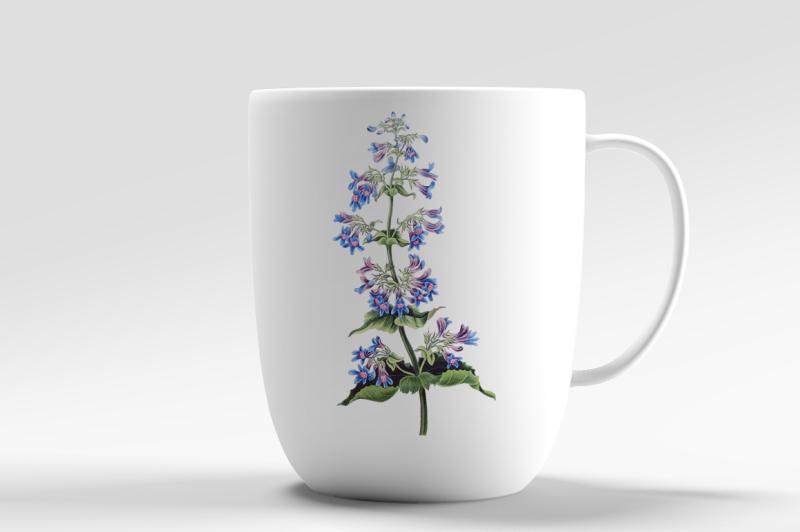 flowers-broad-leaved-penstemon