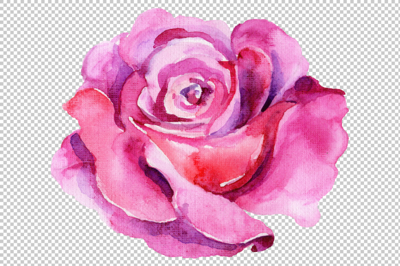 wildflower-pink-rosa-png-watercolor-set