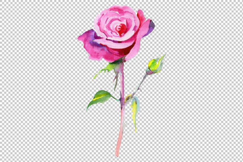 wildflower-pink-rosa-png-watercolor-set
