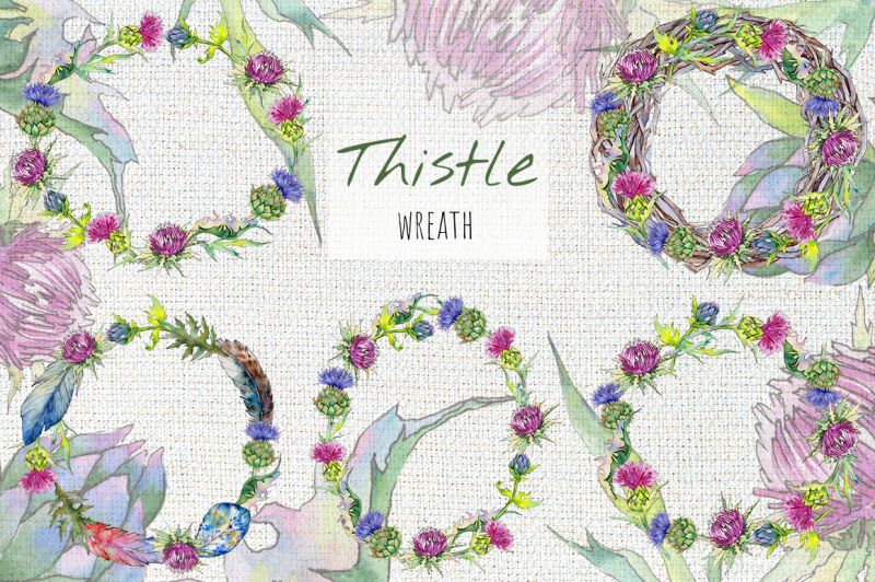 thistle-flowers-collection-png-watercolor-set