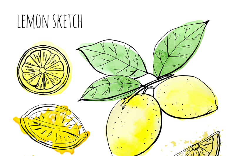 sketch-lemons-watercolor-vector