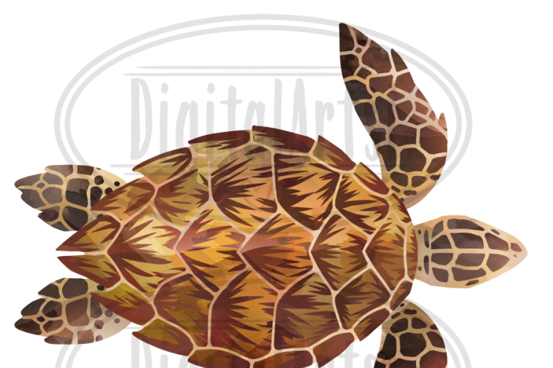 watercolor-sea-turtles-clipart