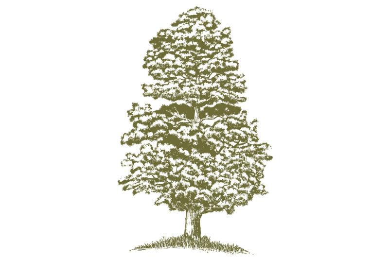 woodcut-juniper-tree