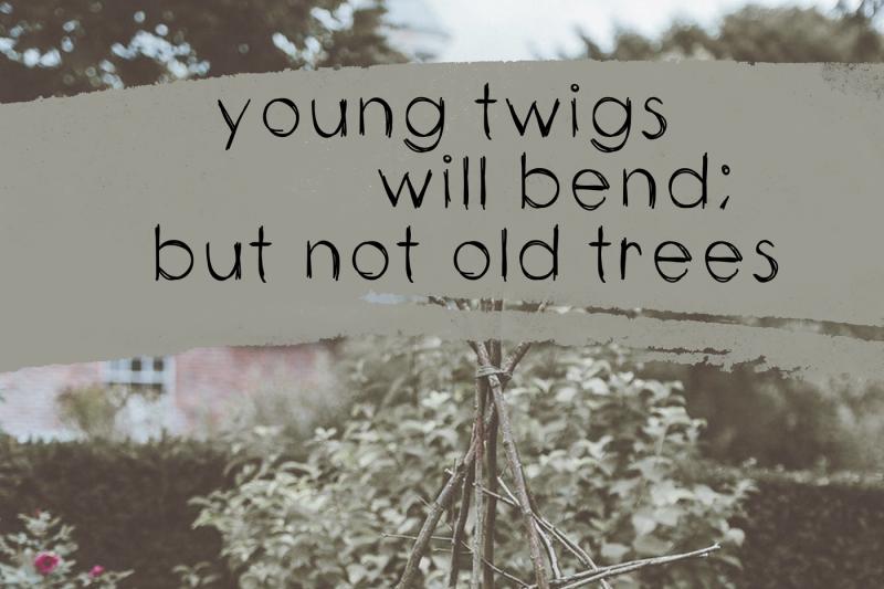 twigs-a-handwritten-scribble-font
