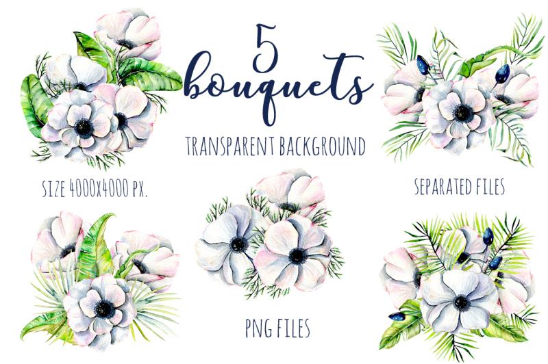 alaska-big-anemone-collection