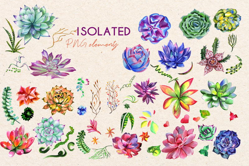 succulent-plant-png-watercolor-set