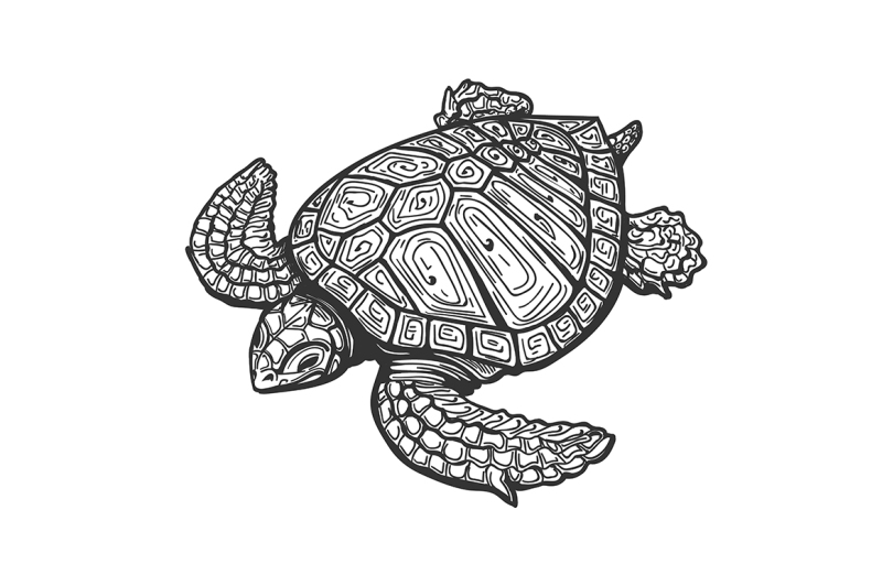 sea-turtle-tattoo-illustration