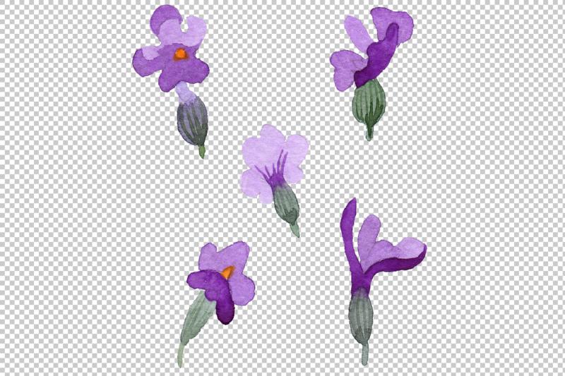 violet-fragrant-lavender-png-watercolor-set