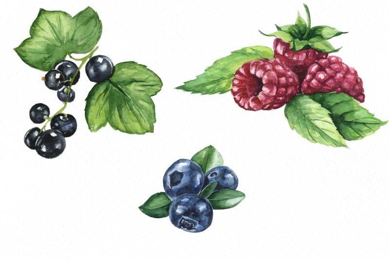 berries-time