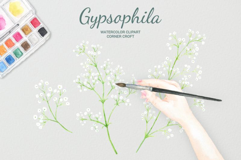 watercolor-gypsophila-clipart
