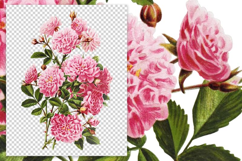 flowers-vintage-rose-lady
