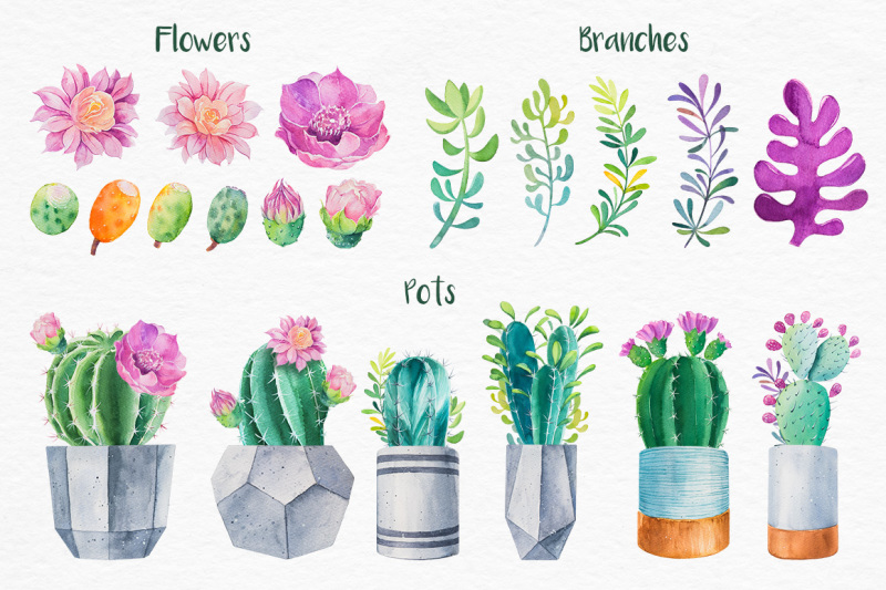 cactus-watercolor-illustrations