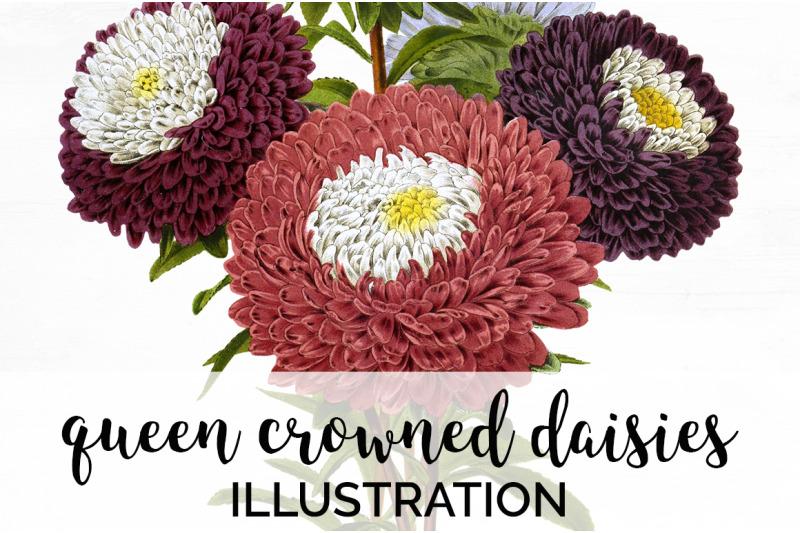 flowers-daisies-flowers