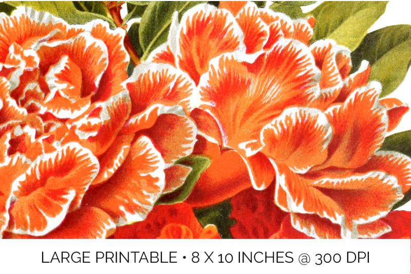 flower-orange-flowers