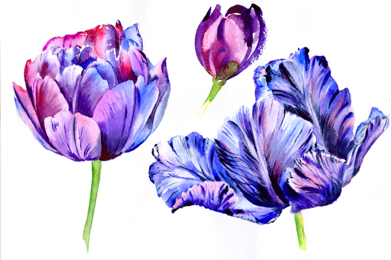 purple-tulip-watercolor-flowers-png