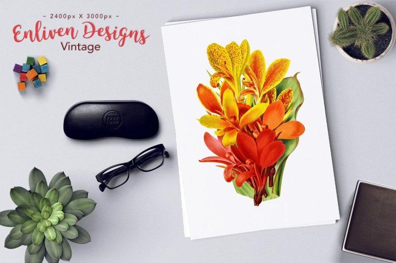 flowers-vintage-new-cannas