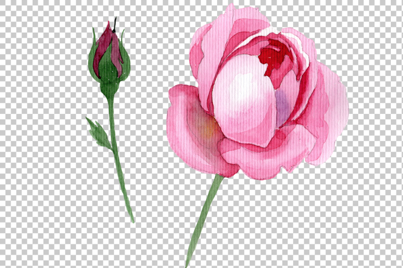 pink-rose-watercolor-flower-png
