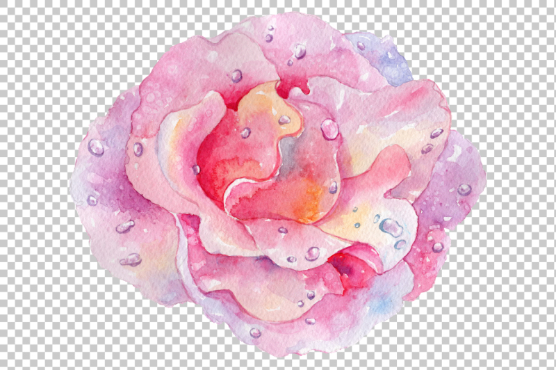 pink-watercolor-rose-flower-png