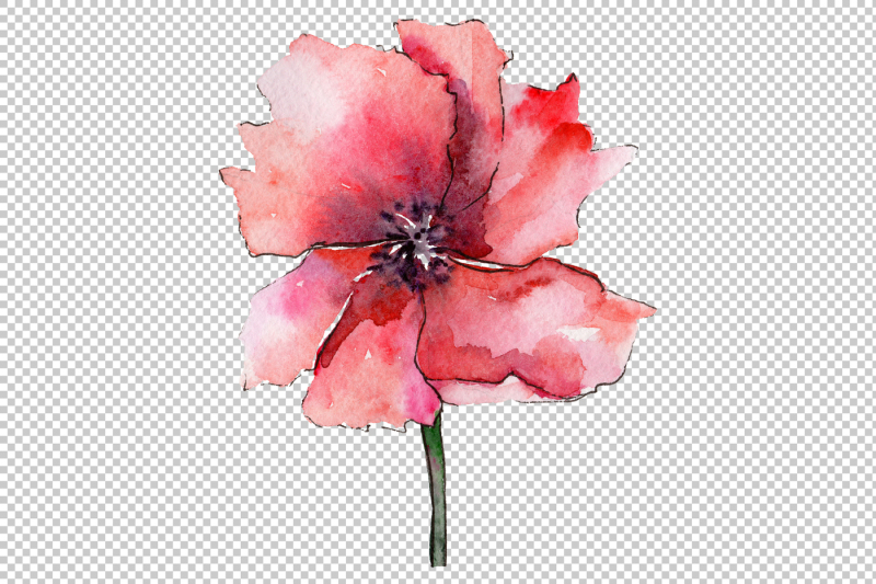 light-red-poppy-png-watercolor-flower-set