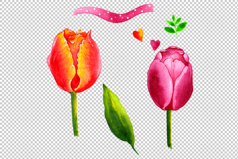 summer-colorful-tulips-png-watercolor-set