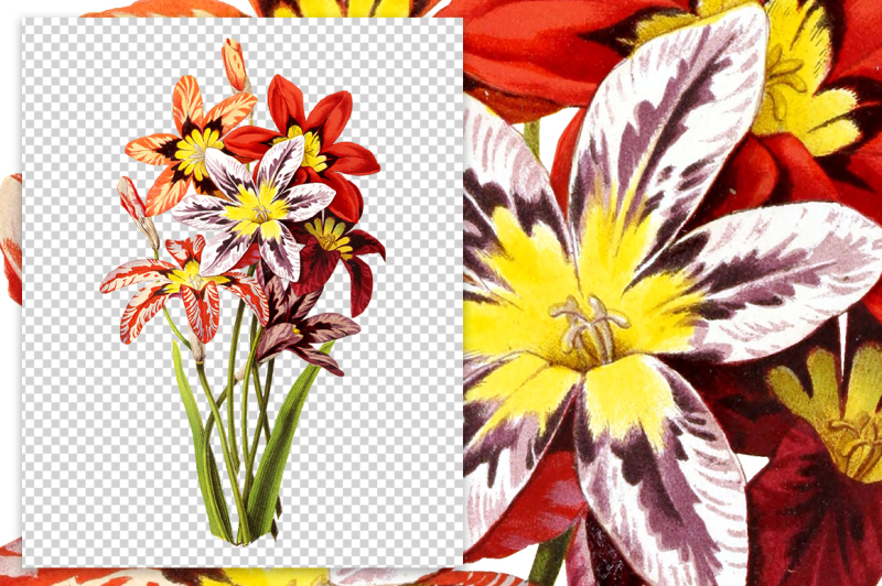 flowers-vintage-harlequin-flower-mix