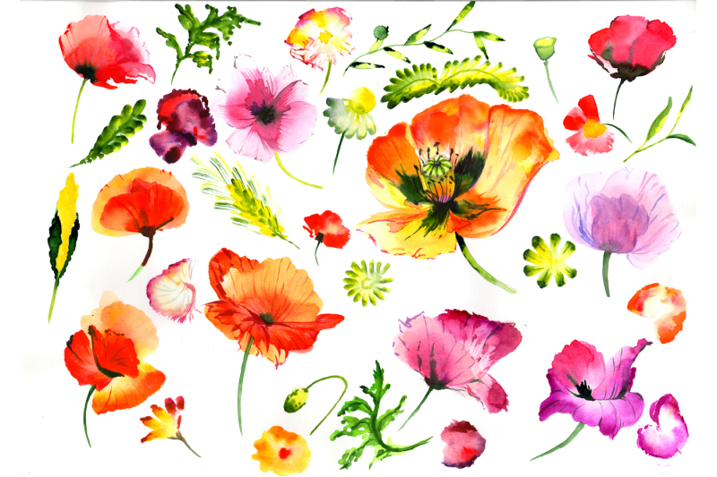 summer-colorful-poppy-flower-png-watercolor-set