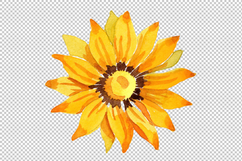 wildflower-yellow-gazania-png-watercolor-set