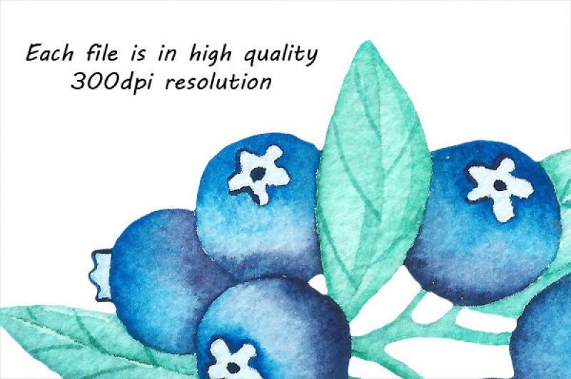 watercolor-blueberry-clipart