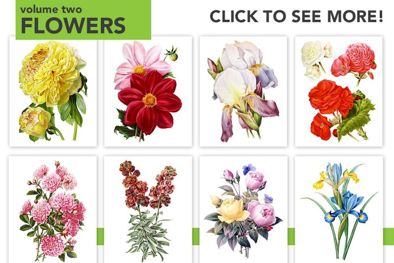 watercolor-flowers-set-anthology-01