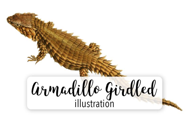 reptiles-armadillo-girdled-lizard