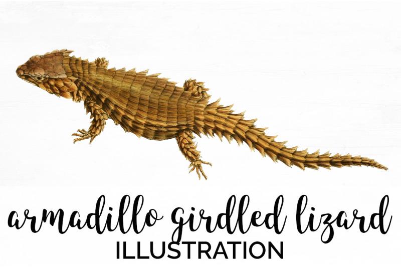 lizard-clipart-armadillo
