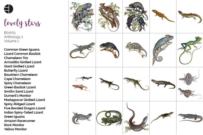 lizard-clipart-bundle